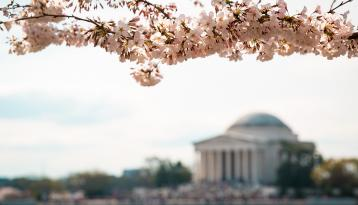 Capital building with blossoms in foreground
