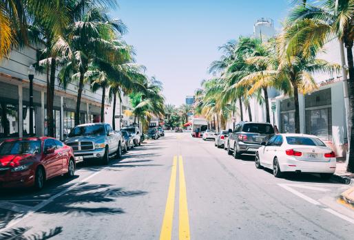 View of car and palm-lined Florida street
